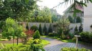 Rośliny do ogrodów w stylu śródziemnomorskim
