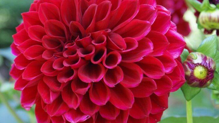 Co dolega roślinom cebulowym
