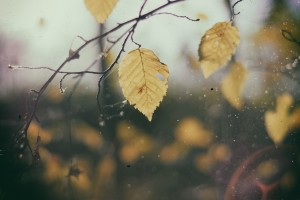 leaves-690474_1280