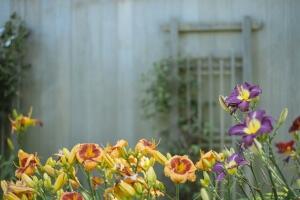 flowers-1031215_1280